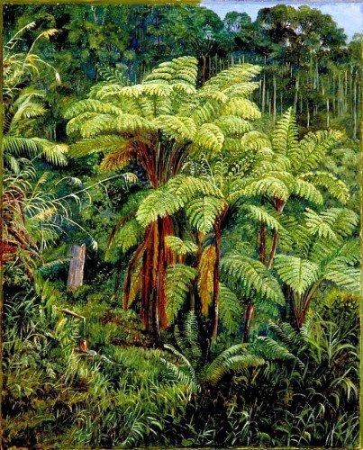 Marianne North - Group of Tree Ferns around the Spring at Matang, Sarawak, Borneo