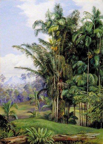 Marianne North - Group of Wild Palms, Sarawak, Borneo