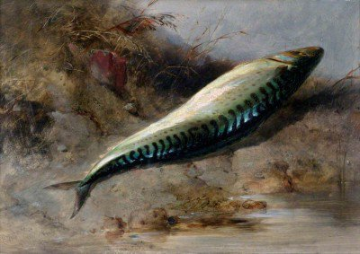 Cooke, Edward William - A Mackerel on the Seashore