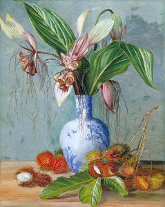 Marianne North - Flowers of Tacca and Bristly Fruit of the Rambutan