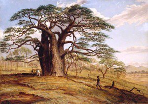 Thomas Baines - A Baobab near the Bank of the Lue