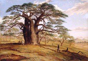 Thomas Baines - A Baobab near the Bank of the Lue